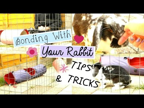Bonding With Your Rabbit: TIPS & TRICKS | RosieBunneh