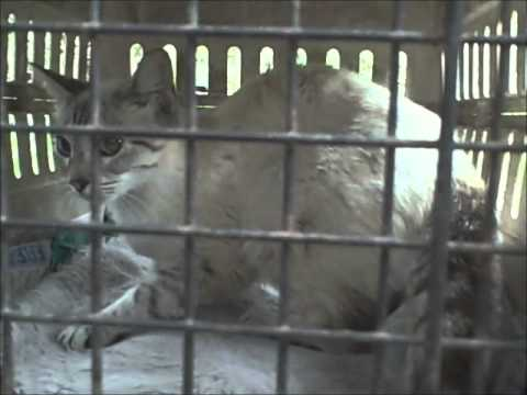 another stray cat gets spayed