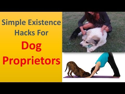 Simple Existence Hacks for Dog Proprietors.|Use Covers to maintain your Furniture Fur Free.