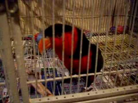 My bird moaning