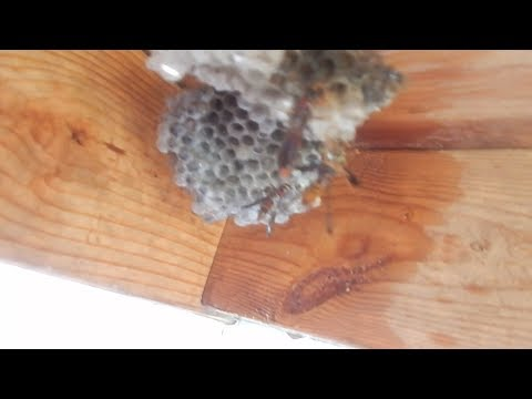 Wasps Went After The Dog & Cat  WD 40 To The Rescue