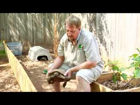 Pet Turtle Care : How to Care for a Desert Tortoise