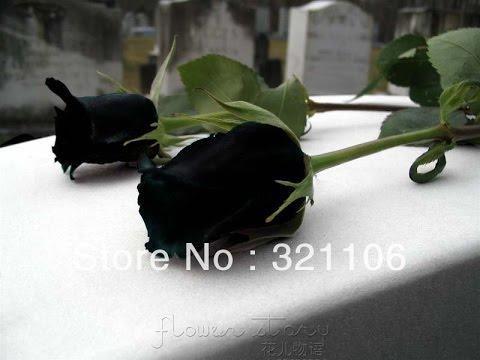 black rose - black rose meaning