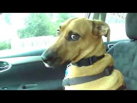 Review and How to of Pet Car Seat Cover - Non Slip Waterproof Hammock Backing Dog Seat Cover