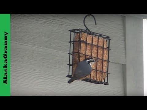 How To Use Suet Bird Feeders