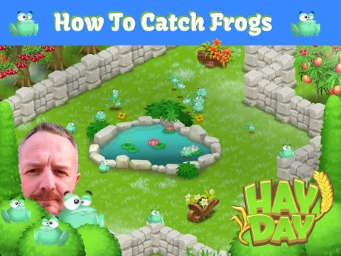 Hay Day Frogs - The Phan Tom Method To Catching Frogs