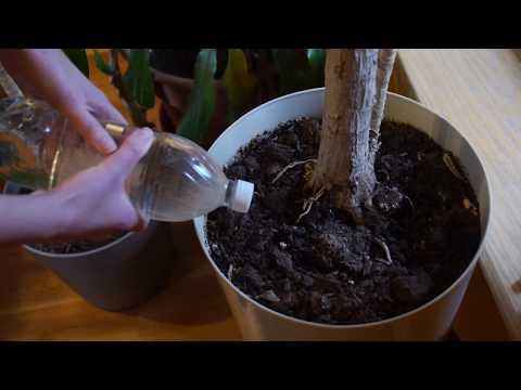 DIY Drip Water Irrigation Soda Bottle