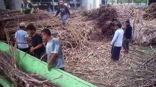 mini sugar mill 300 tcd sugarcane crushing machine. mesin giling gula merah.mesin giling gula putih