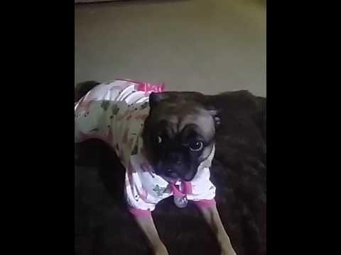 LovinPet Dog Pajamas Pet Clothes Cotton Cozy Onesie Puppy Pjs,  Adorable princess pajamas for my lit