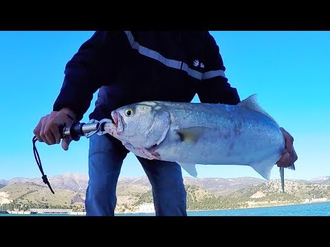 Bluefish on poppers - fishing Greece