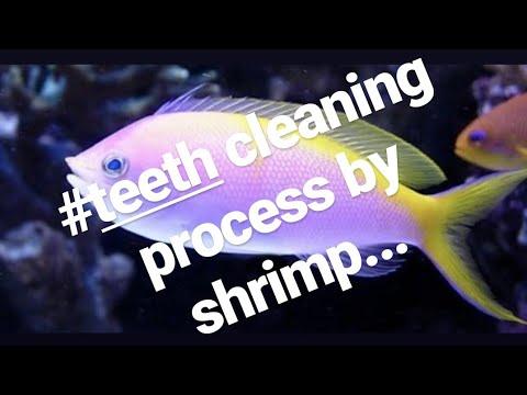 Secrets to keeping anthias fish
