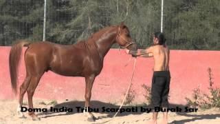 doma india tribu scarpati by burak sar /arabe /pura /macho