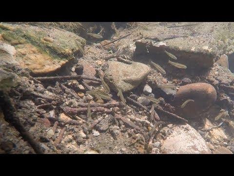 Worlds Most Fascinating City Creek: Treasure Swishing