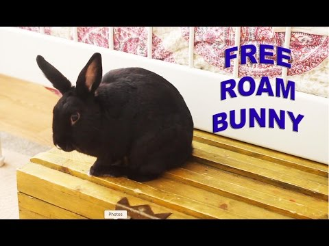 Tips on Living with a Free Roam Bunny