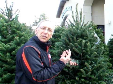 Real Christmas Tree Freshness Test