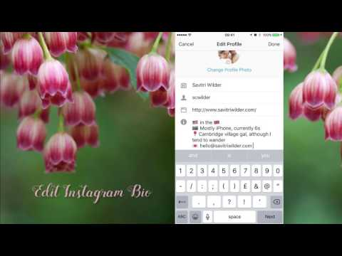 How To Create t he Perfect Instagram Bio