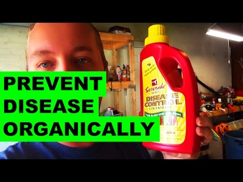 Organically Preventing Lawn Disease with Serenade