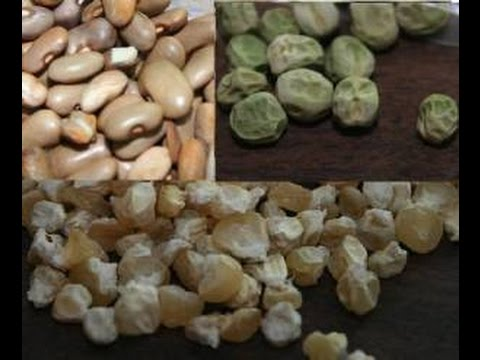 Saving Seeds from Your Garden - Straight to the Point
