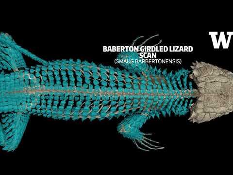 Scientists to create digital encyclopedia of 3-D vertebrate specimens