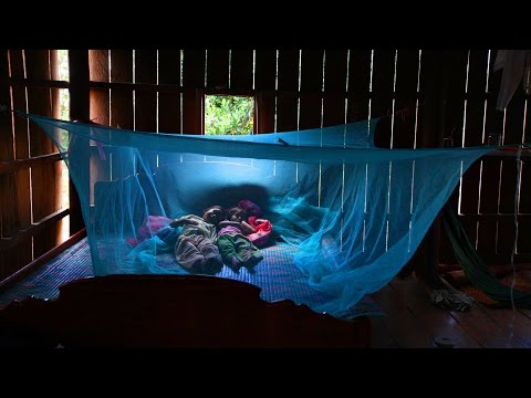 Malaria: How Do You Eradicate an Infectious Disease With No Vaccine? | Philip Eckhoff