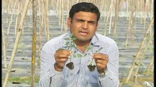 Sohni Dharti - First Agricultural TV Channel of Pakistan