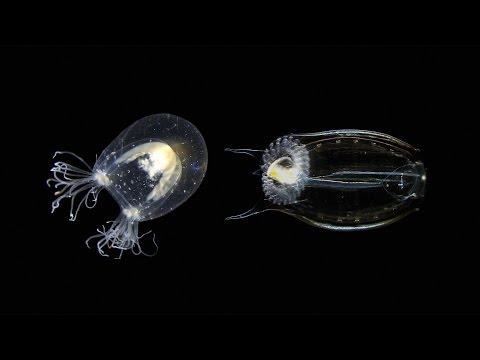 To solve old problems, study new species | Alejandro Sánchez Alvarado