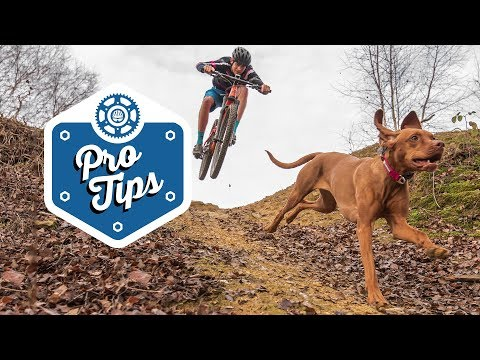 How To Train A Trail Dog - Featuring Tom & Ruby