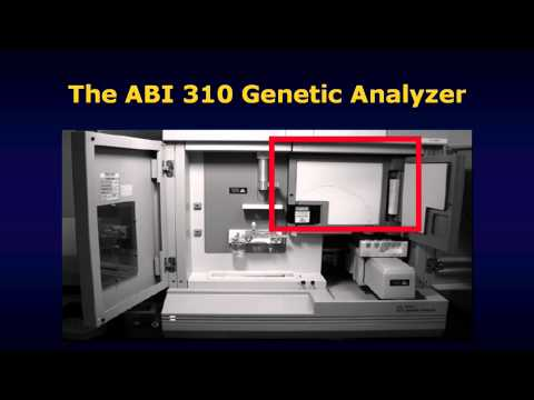 Generating forensic DNA profiles (HD version)