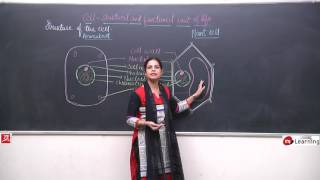Cell Structure And Function 03 For Class 8th