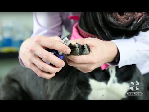 Vet Tutorial | How to Safely Trim a Dog's Nails
