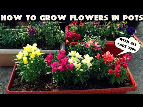 How To Grow Flower Plants At Home