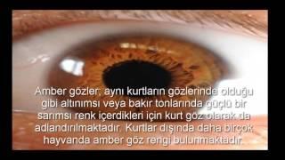 Bir Insanda Iki Göz Rengi Videos 9tubetv