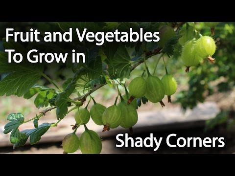 Fruit and Vegetables to Grow in Shade to Increase Productivity