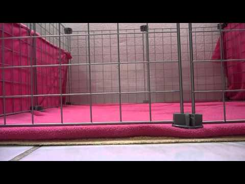 Pregnant guinea pig care part:1 Baby proofing your cages