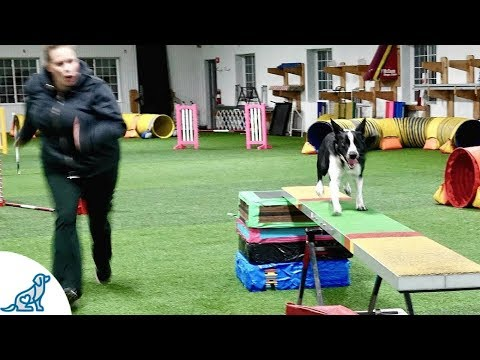 Dog Agility Training With Kayl McCann