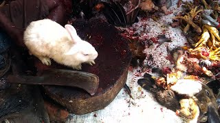 Live White Rabbit Cutting & Chopping in Indian Meat Market