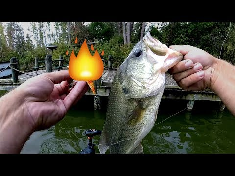 My SECRET WEAPON Fishing Lure for Shallow Water!!!