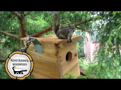 Woodworking: Rescue Baby Squirrel House // How-To Part 2