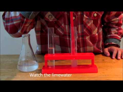 Science Experiment : Carbon Dioxide and Limewater (Breath Test)
