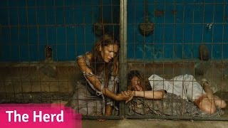 A Shocking Horror Where Women Are Prized For Their Milk - The Herd // Viddsee.com