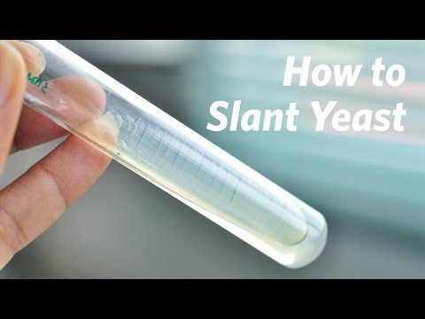 How To Slant Yeast Cultures - Craft Brewing™
