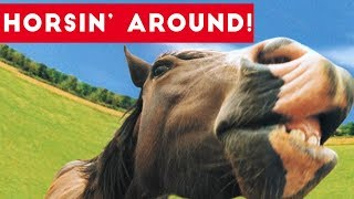 Top Funniest Horse Videos of 2017 Weekly Compilation   Funny Pet Videos