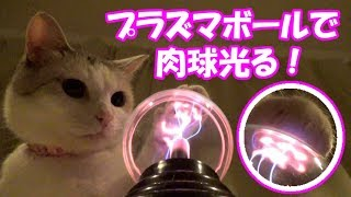 Download プラズマボールで猫の肉球が光る!Cat's paw brights with a plasma ball! Video