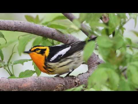 Do Birds Take A Sabbath Rest?