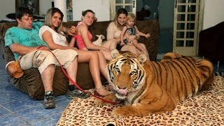 Living With Tigers Family Share Home With Pet Tigers