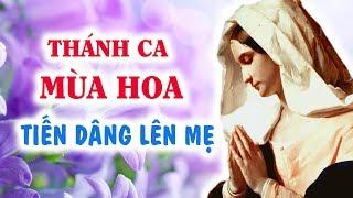 Thánh Ca Dâng Hoa – Kính Đức Mẹ Maria | Bài Hát Dâng Hoa Về Đức Mẹ Hay Nhất (Phần 1)