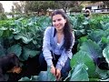 A tour of my organic vegetable garden and the chicken house