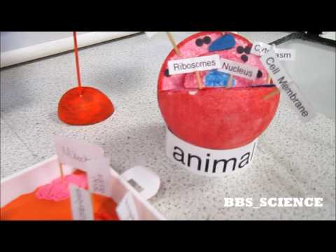 Model Cells - Science ideas - Nerve cell, blood cells, plant and animal Biology