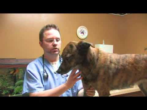 How to Take Care of a Dog's Leg Injury