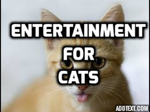 Entertainment For Cats - Hour Long Video of Entertainment For Cats To Watch